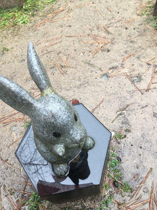 耳痛ウサギ