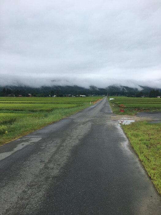 葉山神社へ続く田んぼ一本道