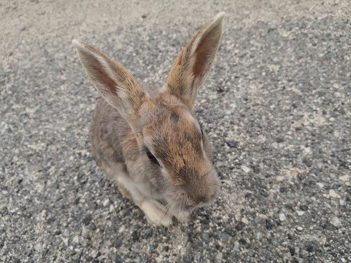 ウサギです